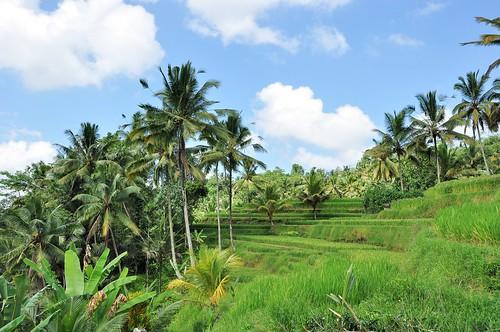 bali nord - indonesie 31