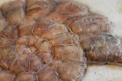 vorbereitete Filzschnecke (gardendreamhouse) Tags: wool felted felting handmade w felt eco schnecke handcraft wandbild filz filzen wetfelting handgemacht amonit handgrafted