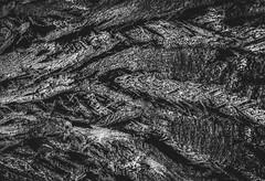La piel de un rbol (edu_420) Tags: naturaleza detalle textura blanco mono negro rbol abstracto sombras hdr corteza curvas tambillo