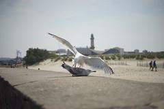 Mven kmpfen um den besten Futterplatz (mbaart) Tags: gulls ostsee