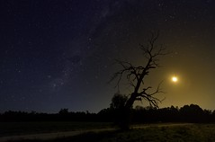 Outback Walkabout (ourkind) Tags: longexposure moon tree zeiss canon stars landscape nightscape australia southerncross astrophotography walkabout newsouthwales outback astronomy milkyway waggawagga southernhemisphere visitnsw