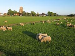 Ransdorp (3) (de kist) Tags: thenetherlands aerial kap waterland ransdorp