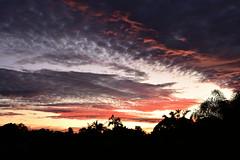 Red flood (Dreaming of the Sea) Tags: nikon d7200 dusk twilight palmtrees sunset tamron tamronsp2470mmf28divcusd redsunset bundaberg bluesky orangesunset bamboo cloud sky landscape topf25 1000v40f 1500v60f
