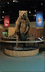 Brown Bear, University of Alaska Museum (SwellMap) Tags: architecture vintage advertising design pc 60s fifties postcard suburbia style kitsch retro nostalgia chrome americana 50s roadside googie populuxe sixties babyboomer consumer coldwar midcentury spaceage atomicage