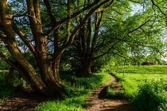 Mechels broek (geert.dehert) Tags: nature landscape nikon belgium d750 20mm mechelen naturephotography landscapephotography naturephotographer natuurpunt landscapephotographer 20mm18g