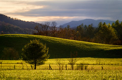 Tuscan Smokies (Josh Stamm) Tags: morning blue trees mountains green field grass sunrise outdoors spring tennessee april layers smoky smokies appalachia cadescove appalachians greatsmokymountainsnationalpark joshstamm