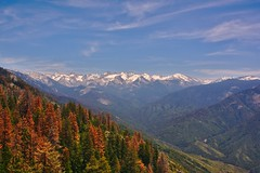 DSC04916 (deerhake.11) Tags: sequoia national park