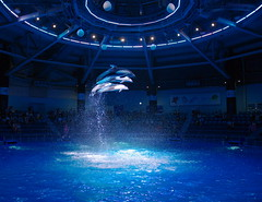 fly me to the moon (t14zucca) Tags: pentax k3 sigma 1835mm f18 dc hsm japan tokyo aquarium dolphin