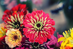 Flowers (AlexRuz) Tags: farmersmarket market good sunday baltimore fresh local baltimorefarmersmarket