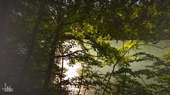 intimation II (Ukelens) Tags: longexposure sunset summer sun water schweiz switzerland stream wasser sonnenuntergang suisse swiss sommer bern svizzera fluss sonne wald sunbeam sonnenstrahl sonnenschein langzeitbelichtung sunstream wlder berncity ukelens