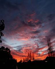 Hillston at 6am -- #australia #travelphotography #goofyvagabonds #vanlifers #roadtrip #ontheroad #lanscape #beautifulplace #natgeo #picoftheday #photography #photooftheday #nature #hillston #sunrise #nofilter #outdoor #seeaustralia #outback #nsw #newsouth (goofy.vagabonds) Tags: new pink sky orange clouds sunrise square landscape colours paisaje roadtrip squareformat ontheroad beautifulsky beautifulplace iphoneography instagramapp uploaded:by=instagram