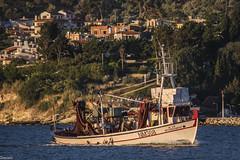 - (Siminis) Tags: morning sea seagulls harbor morninglight fishing fishermen aegean greece return fishingnets mytilene fishingship aegeansea siminis  mytileneharbor