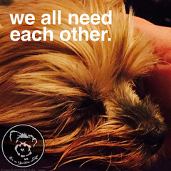 And I need you. (itsayorkielife) Tags: yorkiememe yorkie yorkshireterrier quote