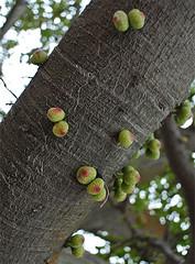 tree buds (gwilli) Tags: animated gif wiggly japan japan2014 sakurajima