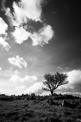 365A5097 (Nazgul 9) Tags: winter bw white black tree wales landscape south scene brecon beacons
