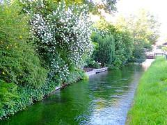 DSC03856 (Mr.J.Martin) Tags: tusslingbavaria bayren germany gapp garden canal village church wildflowers