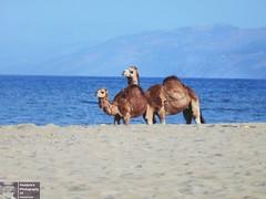 DSCN5675-2 (Pendore) Tags: holidays vacances plage mer maroc marocco