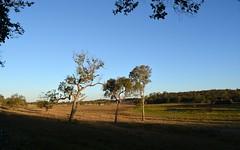 wetlands at Dyraaba village (dustaway) Tags: trees winter water creek landscape australia bluesky nsw wetlands australianlandscape lateafternoon paddocks dyraaba ruralaustralia northernrivers richmondvalley edencreekvalley