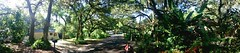 Canopied elegance the treasure of our establishment (bjeffersonimages) Tags: panorama oak live nephew sarasota brookside