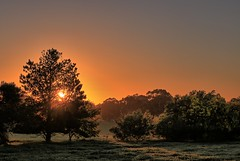 sun's up. (SUSETOZER) Tags: sunrise dawn morning frost