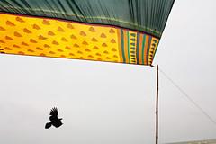 IMG_2968 (dr.subhadeep mondal's photography) Tags: color canon 1755mm bird streetphotography urban saree sea india digha seabeach outdoor