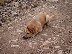 IMGP2670 (jamin.sandler) Tags: supertakumar50mm14 pentaxistds dog