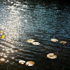 Nuuksion Kansallispuisto (soreikea) Tags: 2015 zenzabronica s2 kodak portra160 helsinki finland film analog travel journey lake nuuksionkansallispuisto
