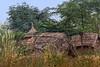 Houses, Uttar Pradesh, India (bfryxell) Tags: house hut india uttarpradesh