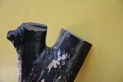 Holz (shortscale) Tags: baum stamm