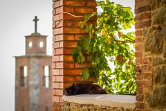 Afternoon nap. (Martolda) Tags: nap pisolino pomeriggio afternoon canon7d 85mm passignano trasimeno urban italy love black cat nero gatto