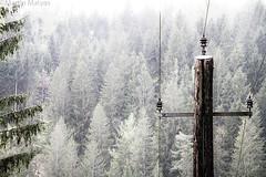 der Strommast (Martin.Matyas) Tags: canon europa ausflug bäume 1mai nationalfeiertag staudamm 2013 canonefs1785isusm 01mai eos7d hierzmannsperre 01052013