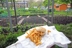 Chip muffin at the allotment, can't beet a simple meal (Craig Hannah) Tags: uk england food lunch photography yorkshire best chips british oldham muffin simple allotment pennine diggle saddleworth greatermanchester westriding chipmuffin craighannah digglechippy