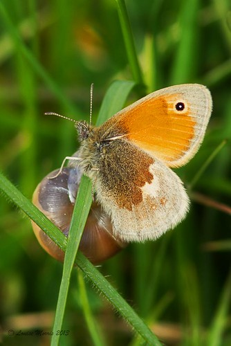 Small Heath II