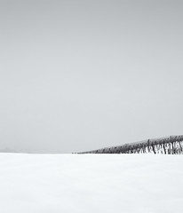 Snow everywhere I (elkarrde) Tags: winter blackandwhite snow digital landscape blackwhite vineyard noiretblanc pentax hills 1750 minimalism tamron minimalistic twop a16 2013 k20d justpentax tamronaf1750mmf28spxrdiiildasphericalif pentaxk20d pentaxart winter2013