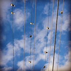 #birds #electric #lines #linear #lookingup #afterwork #worksmartnothard #nature #life #sky #clouds #blue #white (Raul Wong Roa) Tags: square squareformat hefe iphoneography instagramapp uploaded:by=instagram