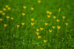 (Aman Arra) Tags: park flowers macro yellow delhi national 70300mm tamron zoological flickrandroidapp:filter=none