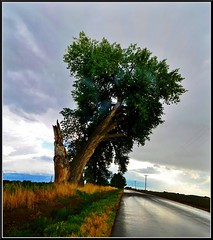 Colorado (Geo_grafics) Tags: road trip tree art nature wet weather america landscape nikon colorado smoke gimp geo 15challengeswinner fotocompetition fotocompetitionbronze
