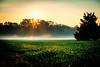 Break of Day (Sky Noir) Tags: morning sun mist green field yellow misty fog sunrise gold day break farm fresh crops rays treeline raysofsun breakofday skynoir