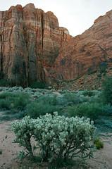 Sunscrape ( RAINYNEPTUNUS ) Tags: mountain mountains mill film rock analog utah sandstone desert kodak dune redrock portra analogphotography sanddunes kodakfilm filmphotography kodakportra