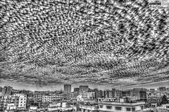 Chopped Skyline (the ) Tags: city sky bw cloud white black clouds landscape cityscape dhaka bangladesh