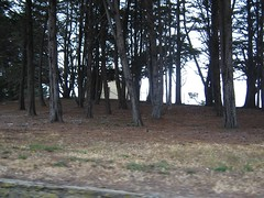 "Trees in the Presidio • <a style=""font-size:0.8em;"" href=""http://www.flickr.com/photos/109120354@N07/11042966976/"" target=""_blank"">View on Flickr</a>"