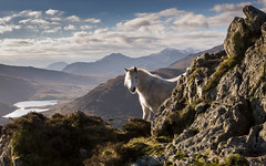 Shadowfax - Eryri Enchanted - Explored (Nick Livesey Mountain Images) Tags:
