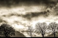 late autumn sky (bernd obervossbeck) Tags: trees sky monochrome clouds treesilhouette himmel wolken monochrom eveningsky dramaticsky bume sauerland hochsauerland baumreihe rowoftrees baumsilhouette dramatischerhimmel mygearandme