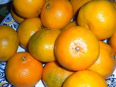 citrus fruits (Just Back) Tags: orange plants yellow fruit table gold juicy berry skin juice bowl round oil citrus peel economic calyx spheroid rutaceae angiosperm hesperidium carpology hypogtnous