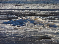 Ice on the river (Dendroica cerulea) Tags: winter ice river frozen newjersey nj fav20 highlandpark raritanriver fav10 middlesexcounty coldsnap donaldsonpark polarvortex