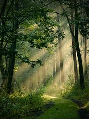 *** (Spartaxus) Tags: light forest fuji finepix katowice ligota