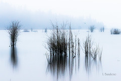 Nisqually Wildlife Refuge (BanJoh Photography) Tags: waterscapes blinkagain blinksuperstars
