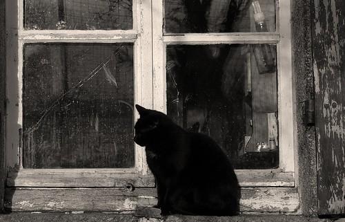 1824 The Black Cat