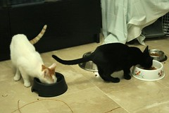 Barri 39 y Lolita 38 (Asociacin Defensa Felina de Sevilla) Tags: espaa sevilla gatos felinos animales gatitos adoptar protectora adopciones apadrinar gatosurbanos defensafelina asociacindeanimales coloniasdegatos proteccindegatos activismoporlosanimales
