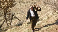firewood (kezwan) Tags: firewood kurdistan kurd kezwan